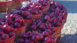 Bushels of red onions Footage