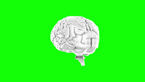 Brain spinning on green screen background Animation