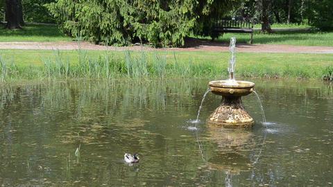 Duck bird swim in lake with fountain splash in summer park Footage