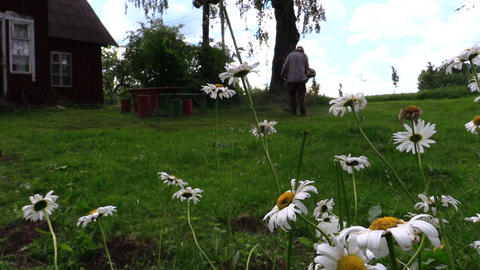 Daisy flowers and farmer man mow lawn with trimmer near house Footage