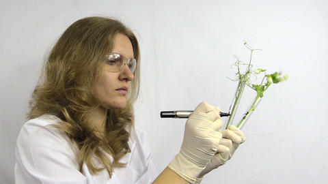 biologist write whit marker codes on flask with pea sprout Footage