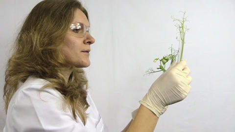 laboratory woman examine flasks with genetically modified plants Footage