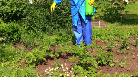 Farmer in protective workwear spray pesticide on potato plants Footage