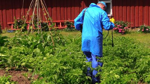 Peasant farmer man spray potato plants with pesticide Footage
