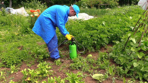 Farmer man spray fertilize pesticides chemical on plants Footage