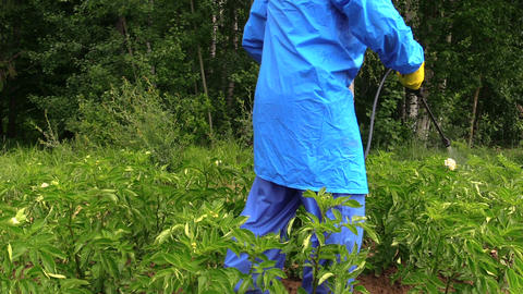 pesticide on potato protecting of pest, vermin, disease Footage