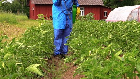 gardener man spray vegetables in garden. Plant protection Footage