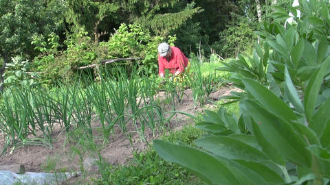 Bean plant leaves and gardener old woman weed plants in garden Live Action