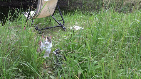 sleepy satiated tabby cat sit in grass near the bucket Footage