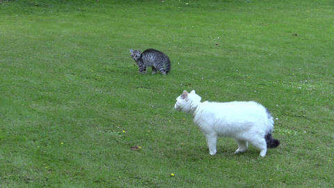 two unfriendly cats meeting ended with escape in green park Footage
