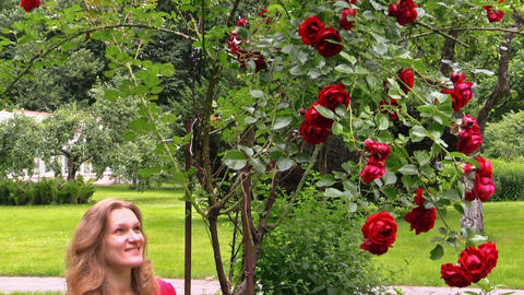 red rose bush. Pregnant happy woman throw rose petals in garden Footage