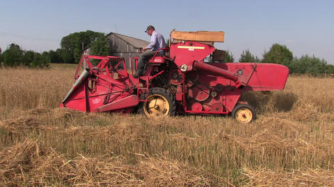 Farm worker harvest wheat plants with red combine harvester Footage