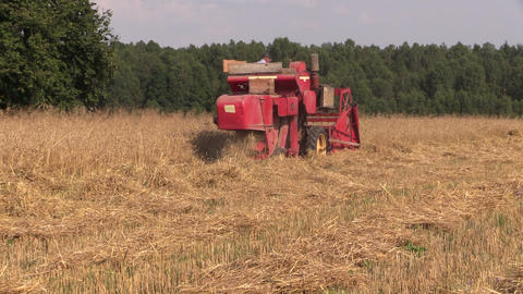 combine in work at barley field near forest seasonal work Footage