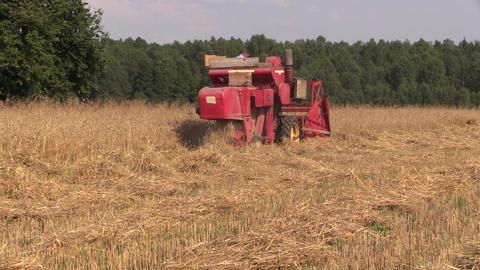 combine in work at barley field near forest seasonal work Footage