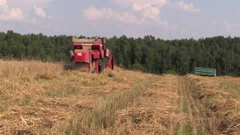 Agricultural combine harvester cut ripe wheat grain field Footage