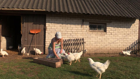 woman feed poultry broiler chicken in farm stall outdoor Footage