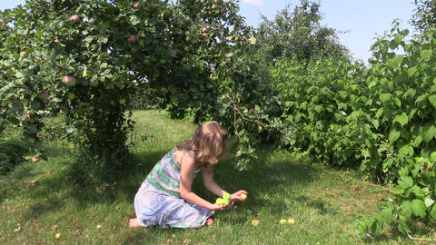 pregnant girl sit under apple tree and gather fallen apple Footage