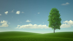 lonely tree in the middle of the field. the fabulous landscape Live Action