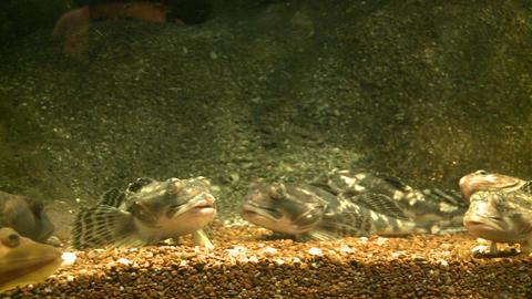 Up-close Aquatic Life (15 Of 16) stock footage