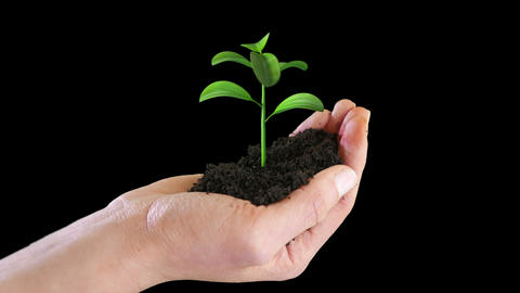 Hand holding growing plant on white backgroud Animation