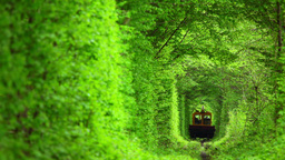 Technical Train In The Tunnel From Deciduous Trees stock footage
