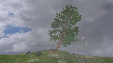 Fallen and Up of Trees Thunder Strom Winds Visual Effect With Sound Footage