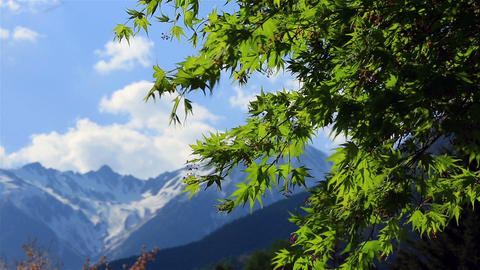 Green Maple Leaves With Mountains And Blue Sky In The Background stock footage