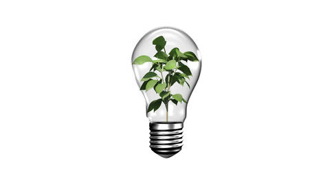 Light bulb with growing plant Animation