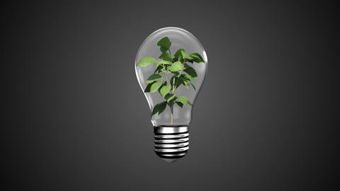 Hands presenting light bulb with plant Animation