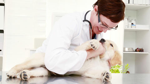 Smiling female vet playing with cute puppy Footage