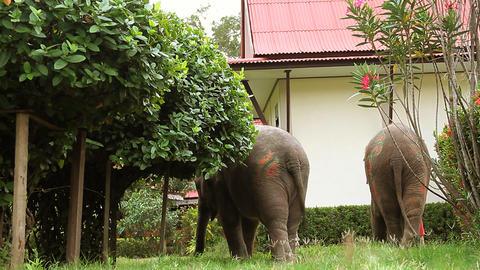 elephant Stock Video Footage