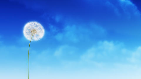 Dandelion Clouds Stock Video Footage