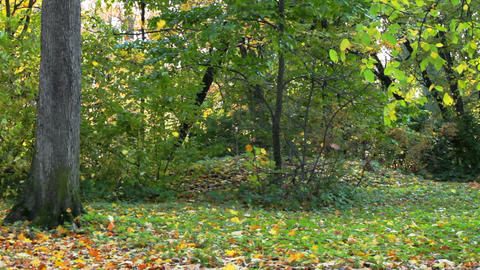 Leaf fall in autumn forest Stock Video Footage
