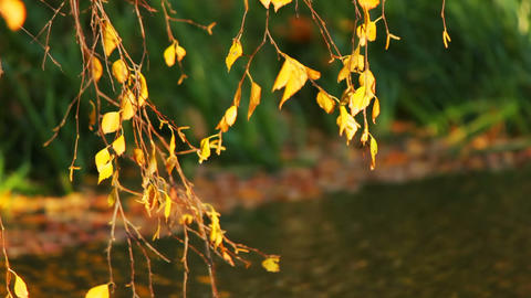Autumn branch Stock Video Footage