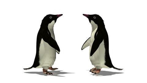 ペンギン Animation