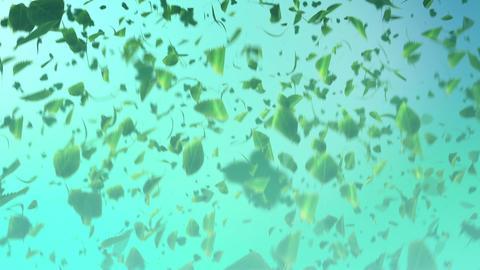 Leaves soars 1080HD BlueBG Stock Video Footage