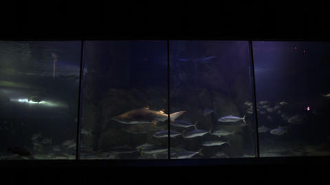 Fish Swimming In A Tank stock footage