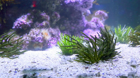 Tropical Fish Swimming In A Tank stock footage