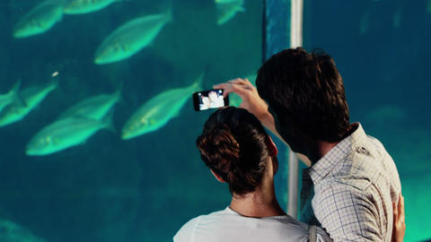 Couple Taking Photo Of Fish stock footage