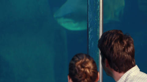 Young Couple Admiring A Fish Tank stock footage