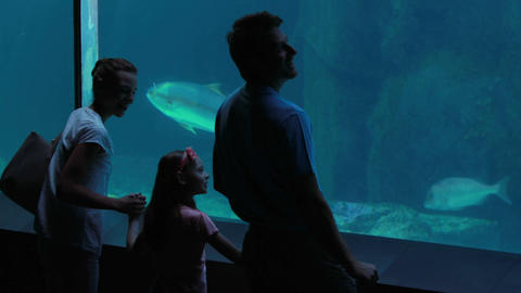 Family Looking At A Fish Tank stock footage