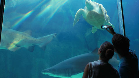 Couple Admiring Sea Turtle Swimming With Shark stock footage
