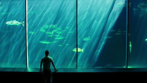 A Man Looking At A Fish Tank stock footage