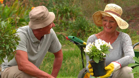 Happy grandmother and grandfather gardening Footage