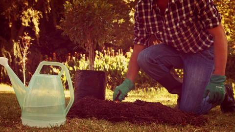 Man gardening in the park Footage