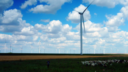 Wind Turbines With Goats, Goatherd Talking On The Mobile Phone, Pan Footage