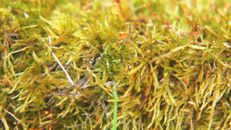 Close Up Of Moss In The Forest stock footage