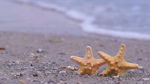 Starfish On The Beach stock footage
