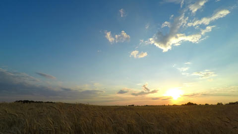 Sunset Sky Over A Wheat Field stock footage