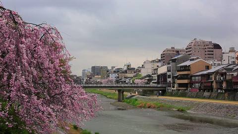 Kamo river in Kyoto ライブ動画